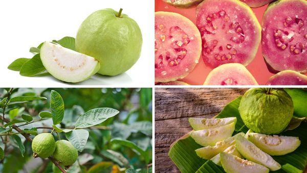 Ổi là một trong những loại trái cây giàu vitamin C và rất tốt cho cơ thể